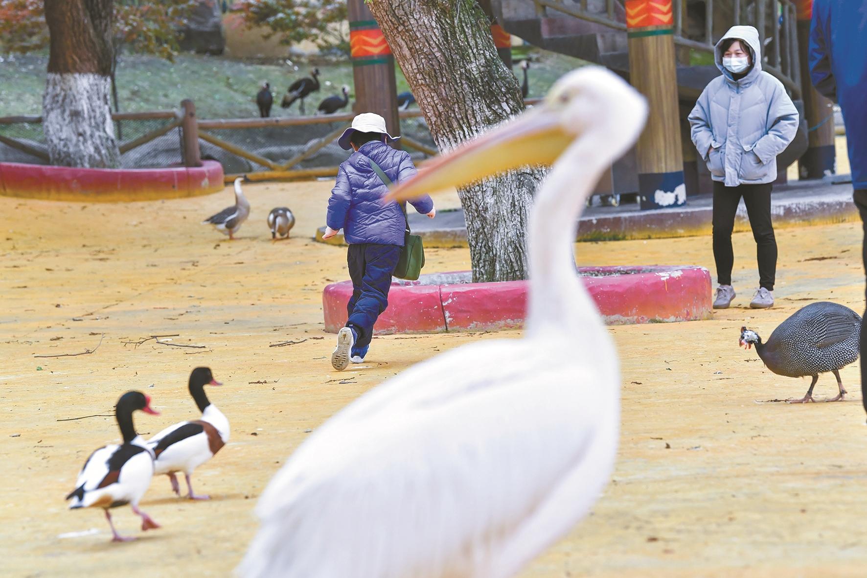 武汉东湖飞鸟世界动物消毒迎客