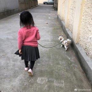 孙俪女儿小花手牵三只狗狗 背影超萌超可爱